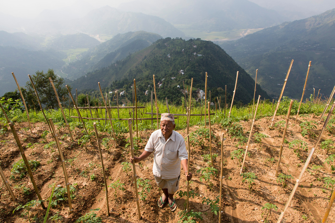 agriculture in nepal Agriculture in nepal has long been based on subsistence farming, particularly in  the hilly regions where peasants derive their living from fragmented plots of.