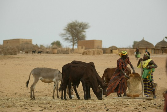 Livestock in developing countries account for up to 80% of agricultural GDP (Photo: ILRI/Stevie Mann).
