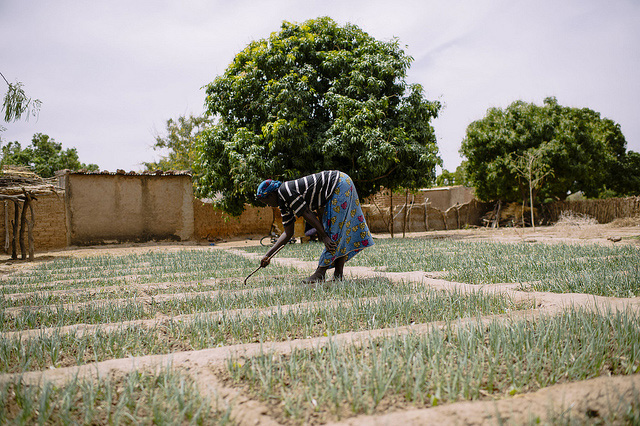 Managing Water and Fertilizer Use for Sustainable Agricultural Intensification